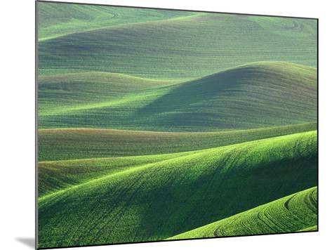 Wheat Springs in the Hills of the Palouse Country, Idaho, USA-Chuck Haney-Mounted Photographic Print