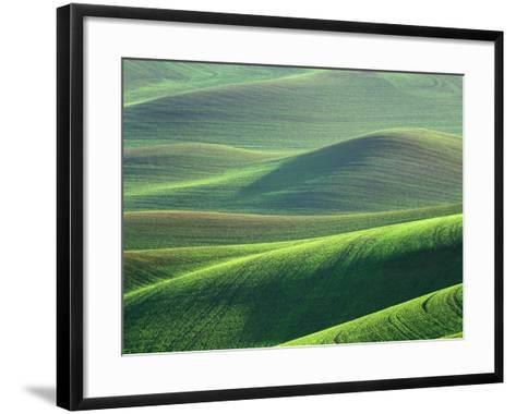 Wheat Springs in the Hills of the Palouse Country, Idaho, USA-Chuck Haney-Framed Art Print