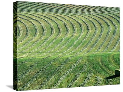 Hay Patterns near Bozeman, Montana, USA-Chuck Haney-Stretched Canvas Print