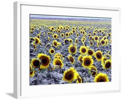 Sunflower Field, Jamestown, North Dakota, USA-Bill Bachmann-Framed Art Print