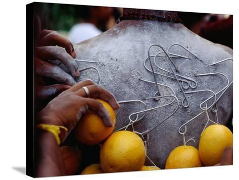 Oranges Hanging from Piercings on a Devotee's Back, Thaipusam Festival, Singapore, Singapore-Michael Coyne-Stretched Canvas Print