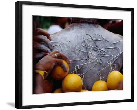 Oranges Hanging from Piercings on a Devotee's Back, Thaipusam Festival, Singapore, Singapore-Michael Coyne-Framed Art Print