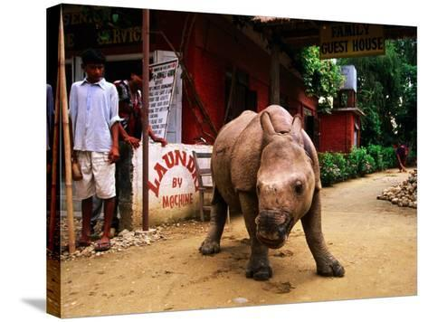 An Orphan Baby Indian Rhinoceros Standing in a Street, Royal Chitwan National Park, Sauraha, Nepal-Andrew Parkinson-Stretched Canvas Print