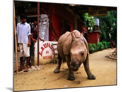 An Orphan Baby Indian Rhinoceros Standing in a Street, Royal Chitwan National Park, Sauraha, Nepal-Andrew Parkinson-Mounted Photographic Print