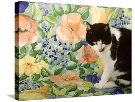 Black and White Cat Sitting on a Floral Chair-Lynne Brotchie-Stretched Canvas Print