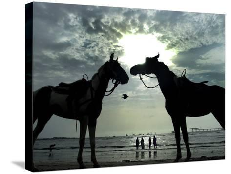 Horses, Used for Joyrides, Stand on the Beach--Stretched Canvas Print