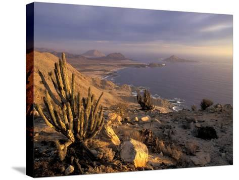 Desert Coast and Pacific Ocean, Atacama Desert, Pan de Azucar National Park,Chile-Andres Morya-Stretched Canvas Print