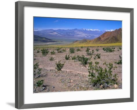 Desert Gold Wildflowers and Black Mountains, Death Valley National Park, California, USA-Jamie & Judy Wild-Framed Art Print