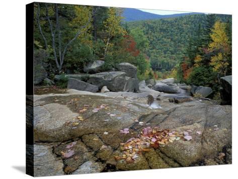 Fall Foliage, Appalachian Trail, White Mountains, New Hampshire, USA-Jerry & Marcy Monkman-Stretched Canvas Print