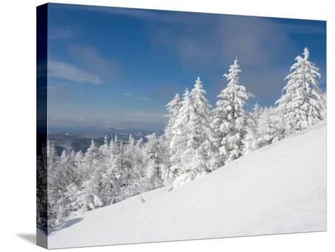 Snowy Trees on the Slopes of Mount Cardigan, Canaan, New Hampshire, USA-Jerry & Marcy Monkman-Stretched Canvas Print