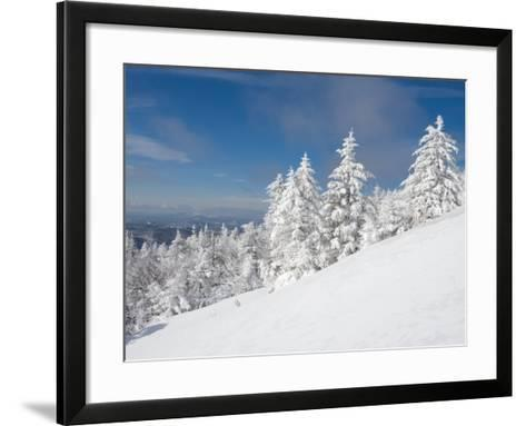 Snowy Trees on the Slopes of Mount Cardigan, Canaan, New Hampshire, USA-Jerry & Marcy Monkman-Framed Art Print