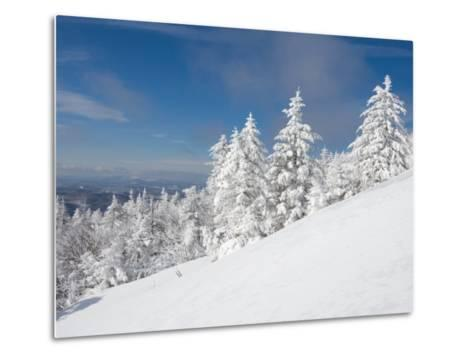 Snowy Trees on the Slopes of Mount Cardigan, Canaan, New Hampshire, USA-Jerry & Marcy Monkman-Metal Print