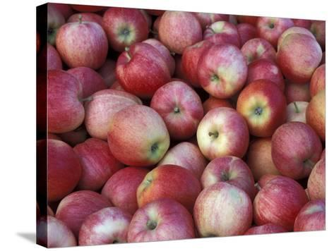 Freshly Picked Gala Apples, Monitor, Washington, USA-Jamie & Judy Wild-Stretched Canvas Print