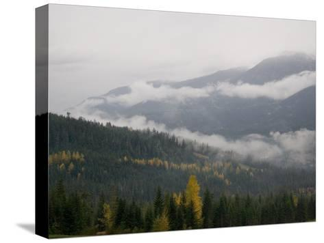 A Foggy and Misty Day in the Pacific Northwest-Taylor S^ Kennedy-Stretched Canvas Print