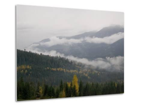 A Foggy and Misty Day in the Pacific Northwest-Taylor S^ Kennedy-Metal Print