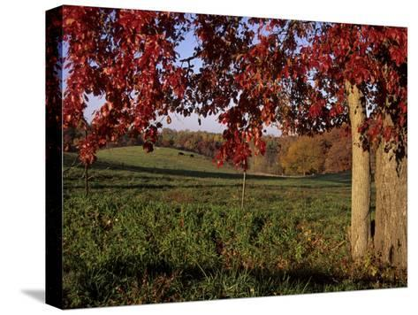 Autumn Color Frames the Rolling Hills of the Virginia Foxhunt Country-Stephen St^ John-Stretched Canvas Print