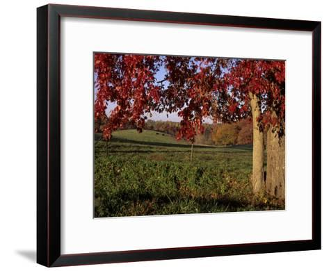 Autumn Color Frames the Rolling Hills of the Virginia Foxhunt Country-Stephen St^ John-Framed Art Print