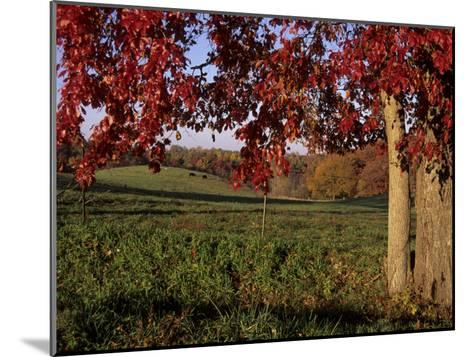 Autumn Color Frames the Rolling Hills of the Virginia Foxhunt Country-Stephen St^ John-Mounted Photographic Print
