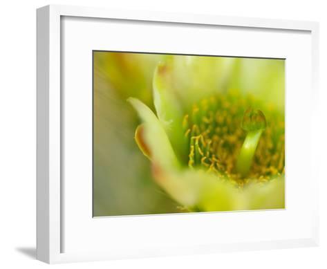 Close View of a Teddy Bear Cholla Cactus Flower-Raul Touzon-Framed Art Print