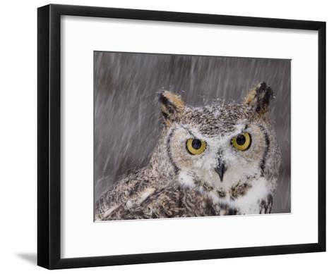 A Captive Great Horned Owl at a Recovery Center-Joel Sartore-Framed Art Print
