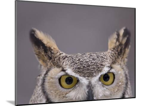 A Captive Great Horned Owl at a Recovery Center-Joel Sartore-Mounted Photographic Print