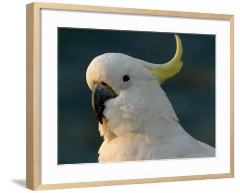 Cockatoo, Sydney Harbor, Australia-David Wall-Framed Art Print