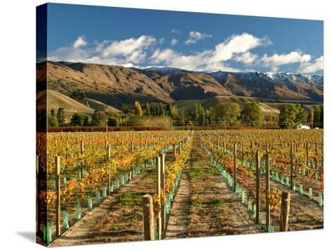 Vineyard and Pisa Range, Central Otago, South Island, New Zealand-David Wall-Stretched Canvas Print