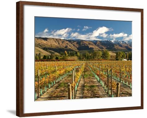 Vineyard and Pisa Range, Central Otago, South Island, New Zealand-David Wall-Framed Art Print