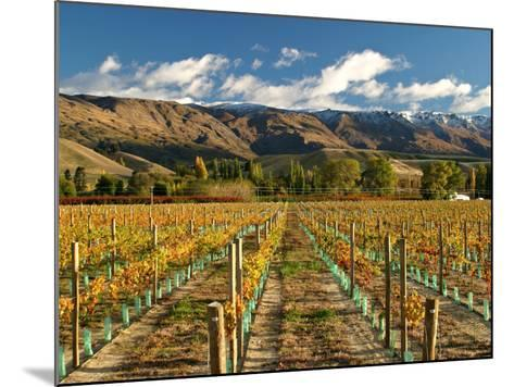 Vineyard and Pisa Range, Central Otago, South Island, New Zealand-David Wall-Mounted Photographic Print