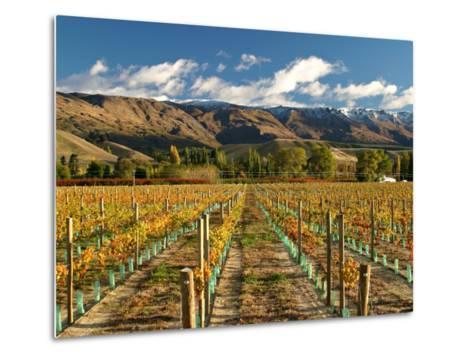 Vineyard and Pisa Range, Central Otago, South Island, New Zealand-David Wall-Metal Print