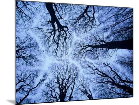 Winter View of Canopy, Jasmund National Park, Island of Ruegen, Germany-Christian Ziegler-Mounted Photographic Print