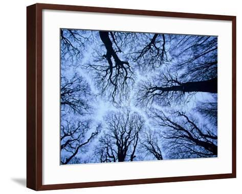Winter View of Canopy, Jasmund National Park, Island of Ruegen, Germany-Christian Ziegler-Framed Art Print