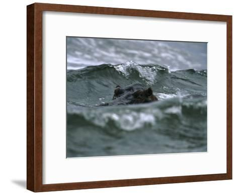 Hippopotamus Peering Out of the Surf-Michael Nichols-Framed Art Print