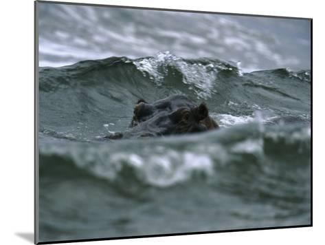Hippopotamus Peering Out of the Surf-Michael Nichols-Mounted Photographic Print