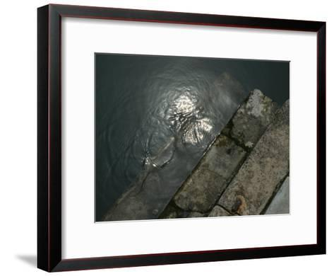 Close View of Stone Steps Leading into the Grand Canal-Todd Gipstein-Framed Art Print
