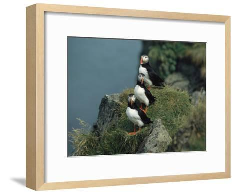 Trio of Atlantic Puffins Perch on a Grass-Covered Cliff-Sisse Brimberg-Framed Art Print