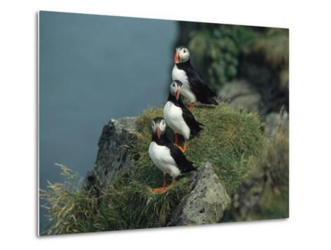 Trio of Atlantic Puffins Perch on a Grass-Covered Cliff-Sisse Brimberg-Metal Print