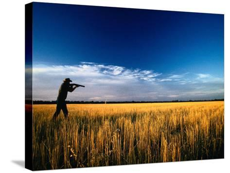 Mallee Farmer, Quail Shooting in Wheat Stubble - Mallee, Victoria, Australia-John Hay-Stretched Canvas Print