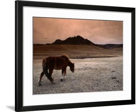 The Wild Horse of Mongolia-Olivier Cirendini-Framed Art Print