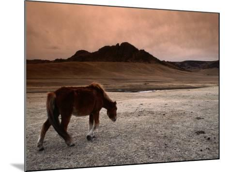 The Wild Horse of Mongolia-Olivier Cirendini-Mounted Photographic Print