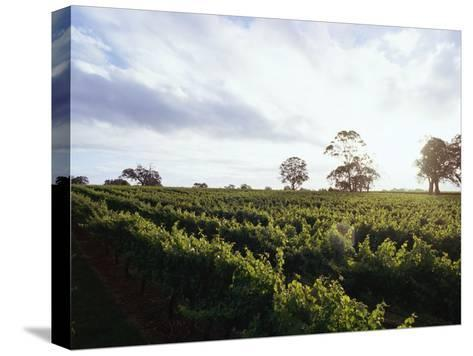 Twilight Clouds over Vineyards in Coonawarra, Wine Country-Jason Edwards-Stretched Canvas Print