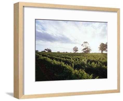 Twilight Clouds over Vineyards in Coonawarra, Wine Country-Jason Edwards-Framed Art Print