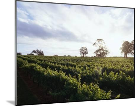 Twilight Clouds over Vineyards in Coonawarra, Wine Country-Jason Edwards-Mounted Photographic Print