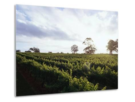 Twilight Clouds over Vineyards in Coonawarra, Wine Country-Jason Edwards-Metal Print