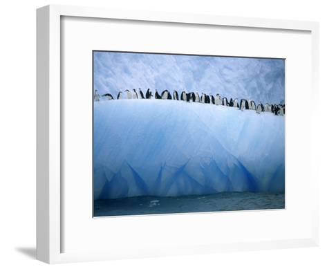 Chin Strap Penguins Cluster Together on an Iceberg-Ralph Lee Hopkins-Framed Art Print