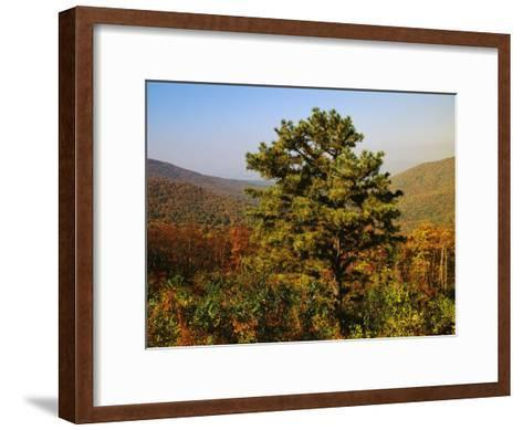 Pine Tree and Forested Ridges of the Blue Ridge Mountains-Raymond Gehman-Framed Art Print