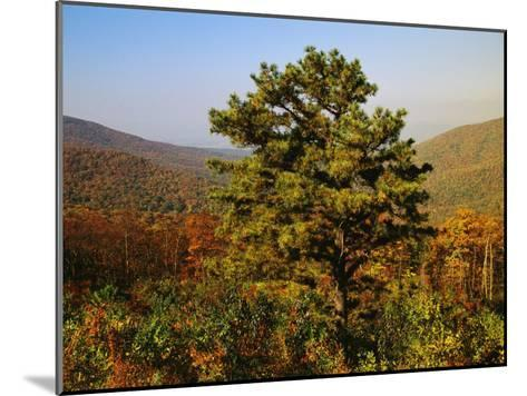 Pine Tree and Forested Ridges of the Blue Ridge Mountains-Raymond Gehman-Mounted Photographic Print