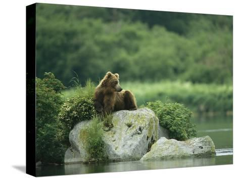 A Brown Bear Resting on a Rock at the Waters Edge-Klaus Nigge-Stretched Canvas Print