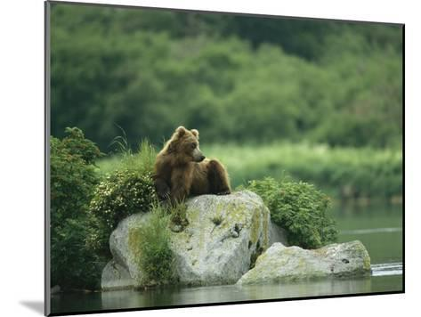 A Brown Bear Resting on a Rock at the Waters Edge-Klaus Nigge-Mounted Photographic Print