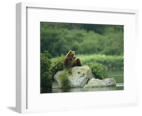 A Brown Bear Resting on a Rock at the Waters Edge-Klaus Nigge-Framed Art Print